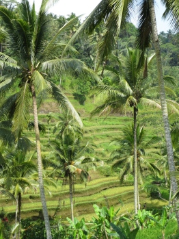 The rice paddies really are stunning.