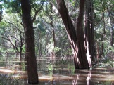 The flooded forest, again.