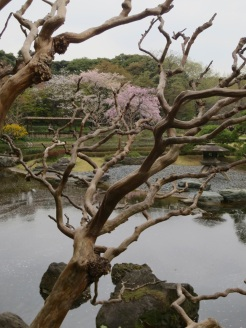 In the gardens of the Imperial Palace.